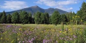 slideshow-spring-wildflowers